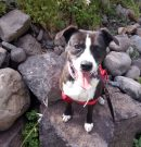Paseo de Clyde- Walk with Clyde – Spaziergang mit Clyde